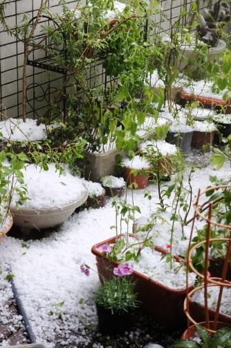 20120506雹が降ったよ①