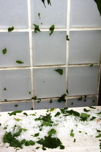 20120506雹が降ったよ⑧