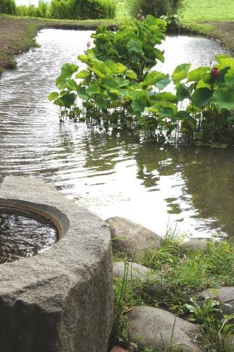 久太屋の蓮池