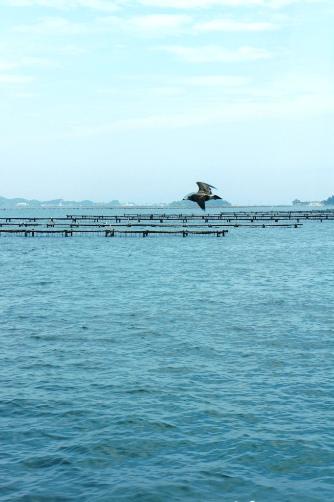 海苔の養殖?
