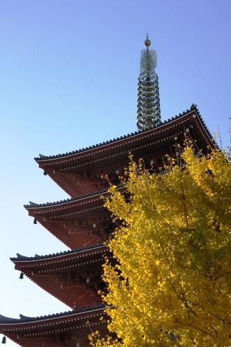 銀杏の樹と五重塔