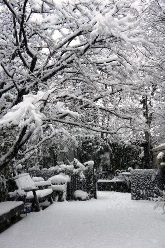 20120114 雪の日①
