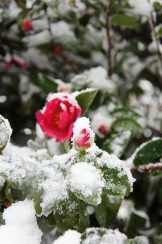20120114 雪の日③