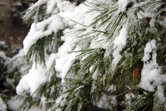 20120114 雪の日④