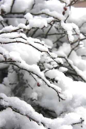 20120114 雪の日⑥