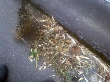 路肩の掃き掃除