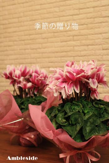 IMG_7989 季節の贈り物