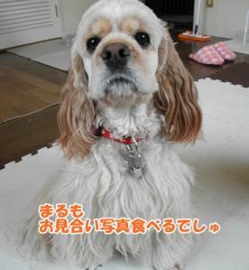 011_20110321145925.jpg
