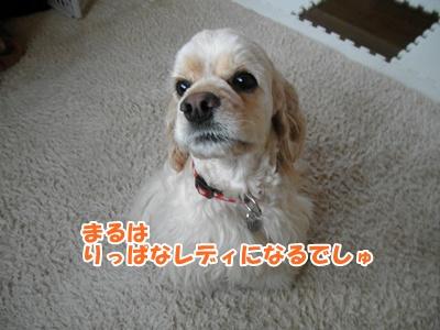 049_20110316214421.jpg