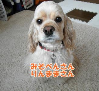 051_20110316214420.jpg