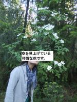 DSCF0168.jpg