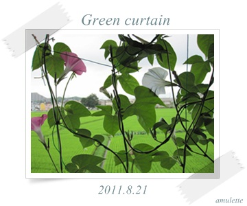 green curtain 8-21