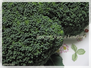 broccoli from Landlord