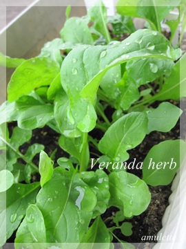 Veranda herb