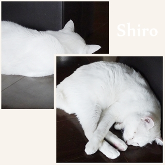 Shiroちゃん