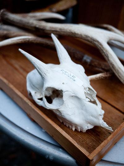 カモシカの骨