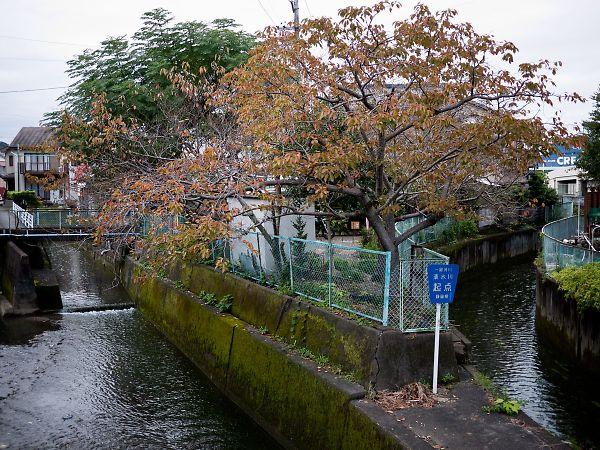 ひまわり公園4