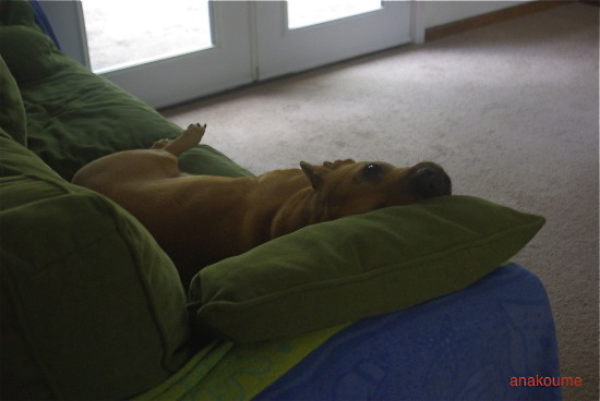 私のベッド1