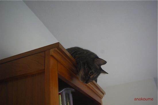 本棚の上で4