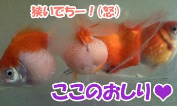 Photo0116.jpg