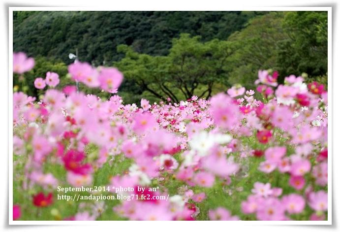20141006 IMG_3741