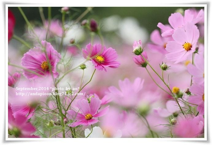 20141006 IMG_3748
