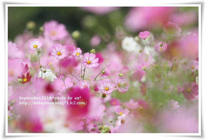 20141006 IMG_3754