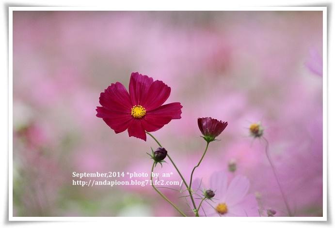 20141006 IMG_3954