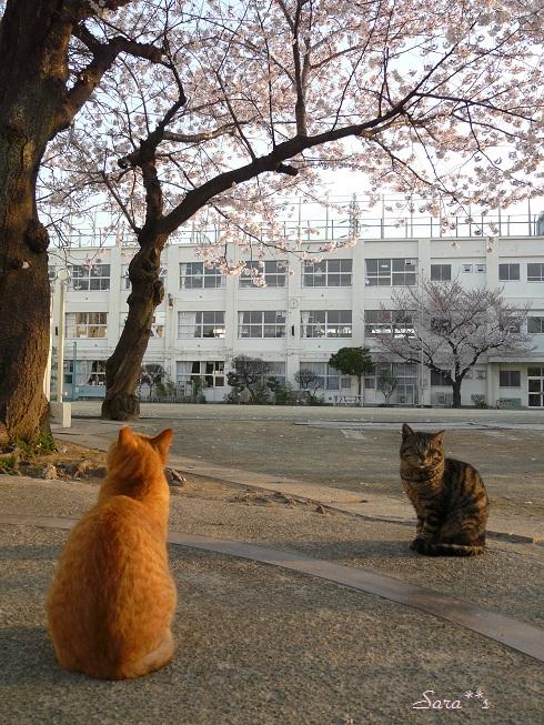 P1110931 bu20 桜