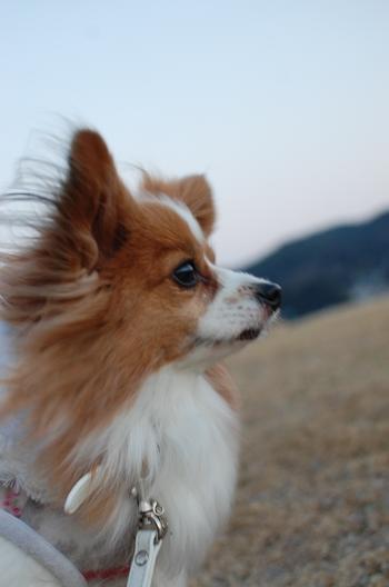 風が冷たい