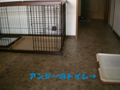 アンジーのトイレ→