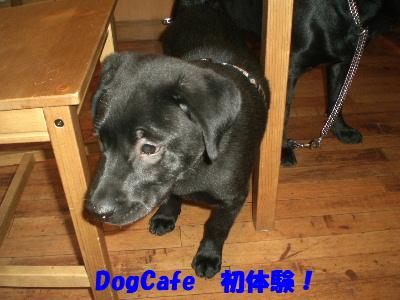 DogCafe 初体験!
