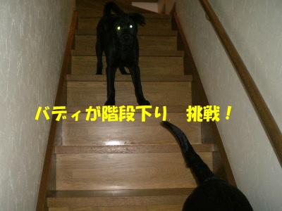 バディが階段下り 挑戦!