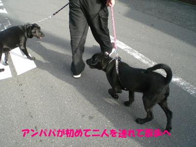アンパパが初めて二人を連れて散歩へ