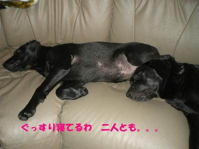 ぐっすり寝てるわ 二人とも。。。