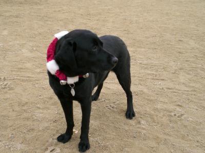 ミスティのクリスマス