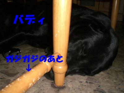 バディ テーブルの下でオヤスミ