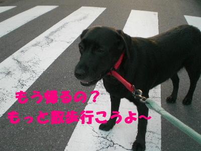 もっと散歩行こうよ~