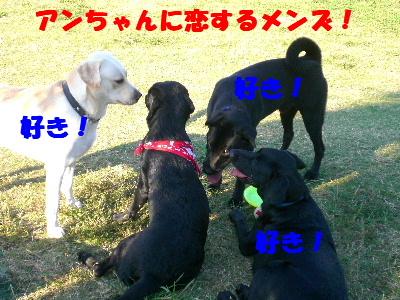 アンちゃんに恋するメンズ!