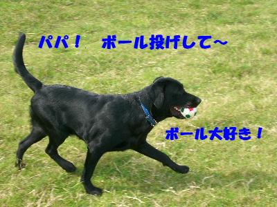 パパ! ボール投げして~