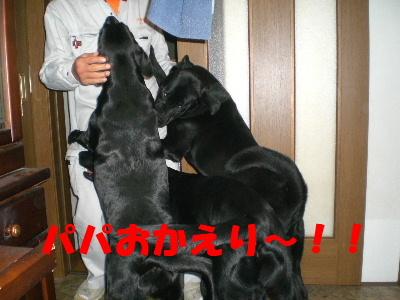 パパおかえり~!!