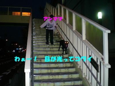 CIMG3060_20100705225413.jpg