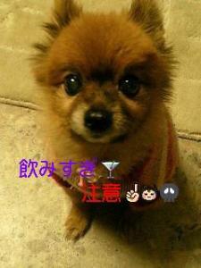 photo_20101210103445.jpg