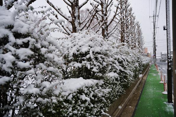 100218 025 雪景色