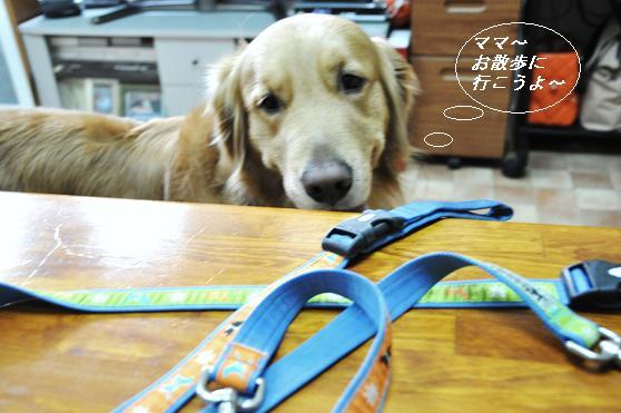 2010.04.01 043  ケニー