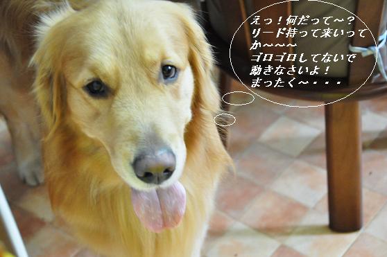 2010.04.01 048  ケニー