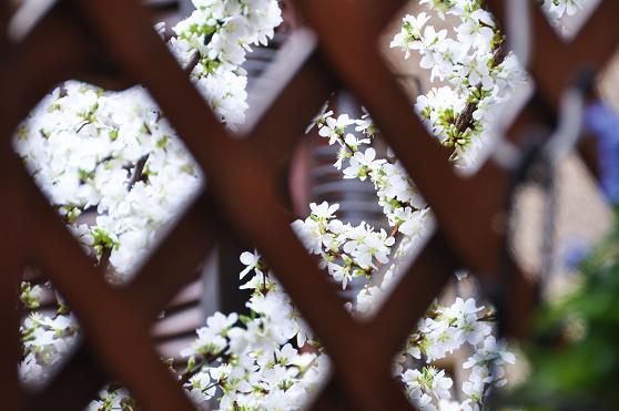 2010.04 012  花