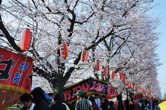 1040404 025 桜並木