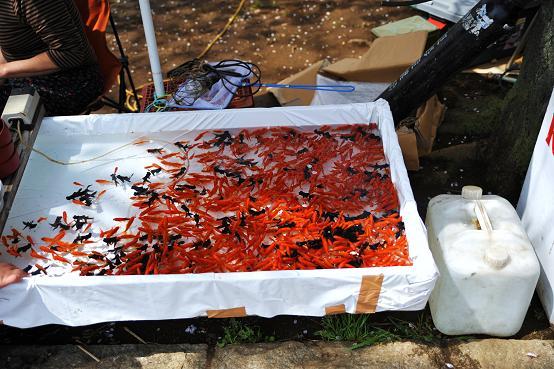 2010.04.06 024 金魚すくい