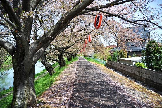 100415 002  越谷桜並木